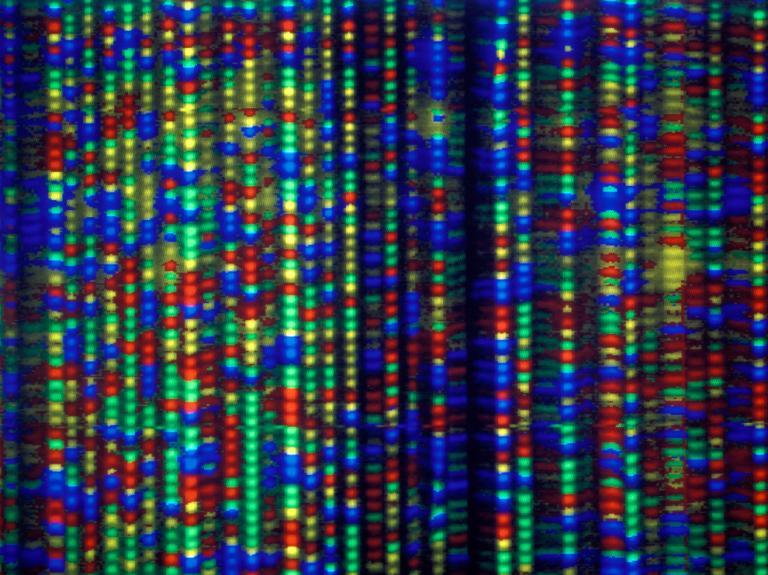 Labelled strands of DNA