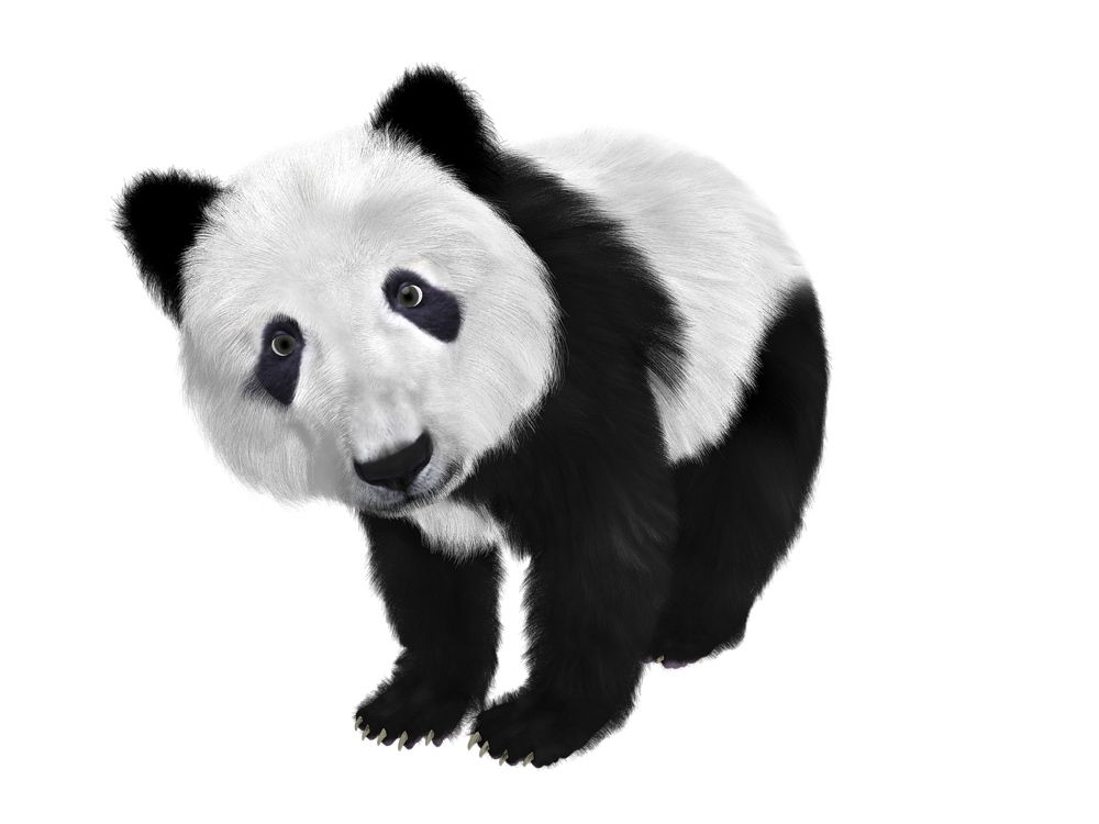 Giant pandas have black and white fur color schemes that aren't like many other mammals in their class.