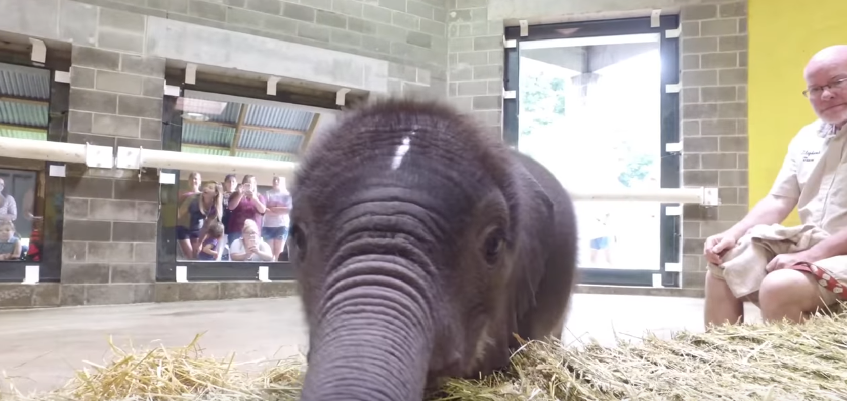 The elephant calf is viewed by Pittsburgh Zoo visitors for the first time on Friday.