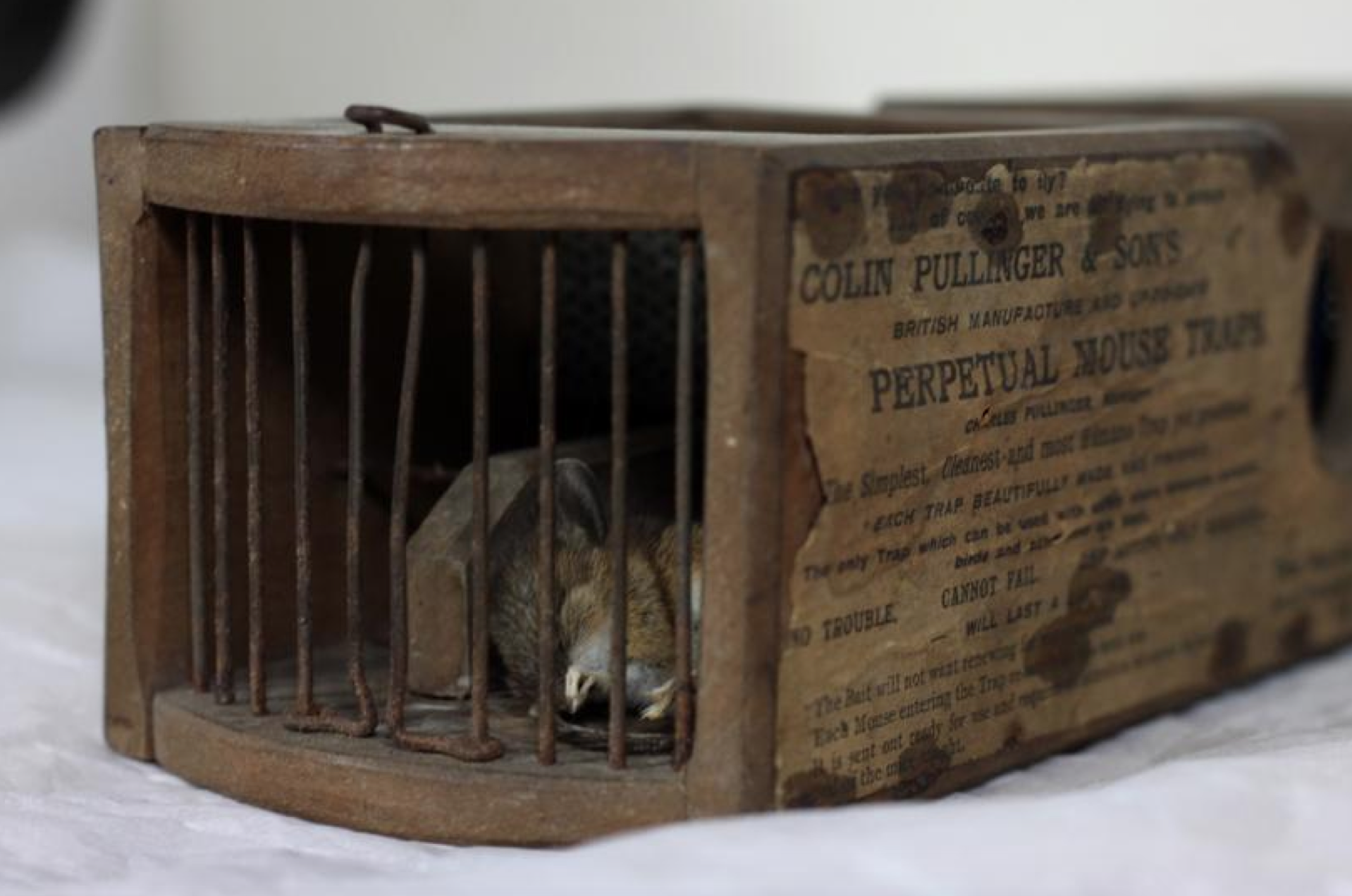 This unsuspecting mouse was captured by a 155-year-old display mouse trap.