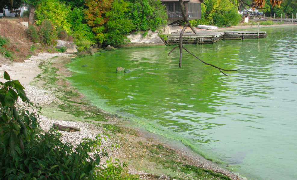 In this image from NOAA, a harmful algae bloom is seen at Kelley's Island, Ohio - Lake Erie in September 2009.