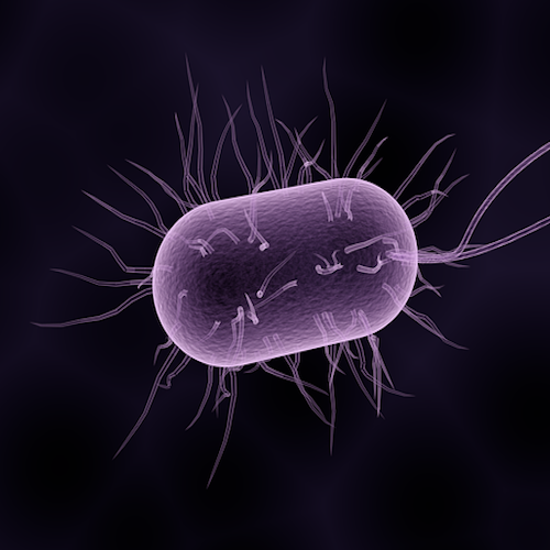 Some microbes can report on their environment. Now, scientists have made them 'remember' the event. / Image credit: Pixabay