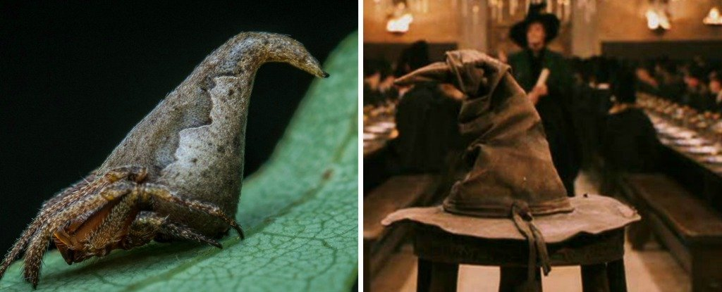 A new spider species out of India has been named after the Sorting Hat from Harry Potter due to an eerie resemblance.