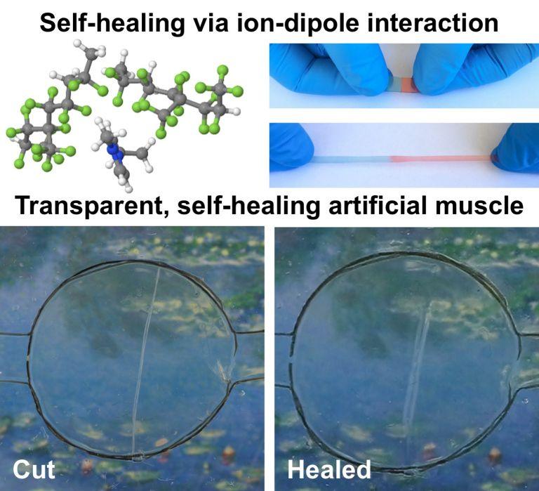 Illustration showing new self-healing material (Wang et al)