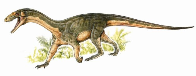 Meet Teleocrater, the early ancestor of the dinosaurs.