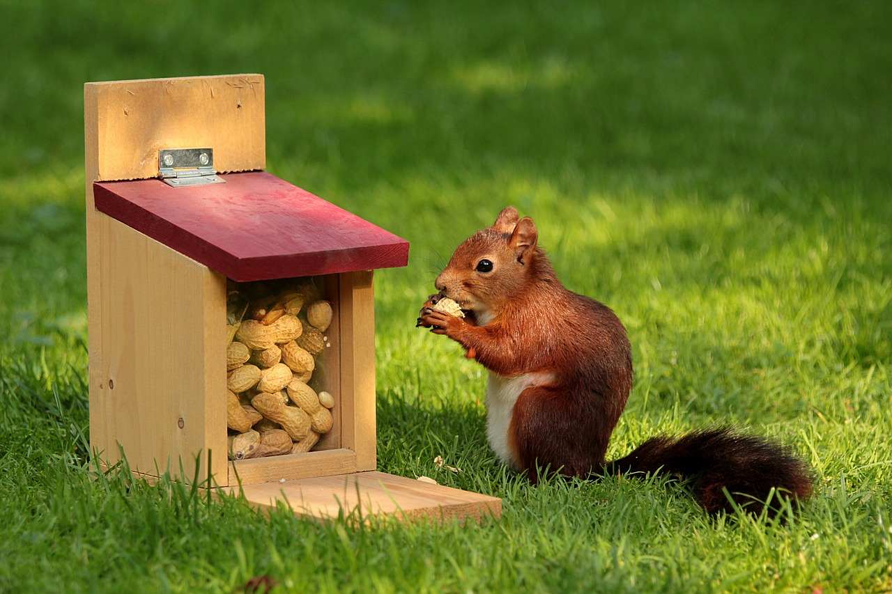 Squirrels use advanced cognitive techniques to organize the different kinds of nuts they find and hide.