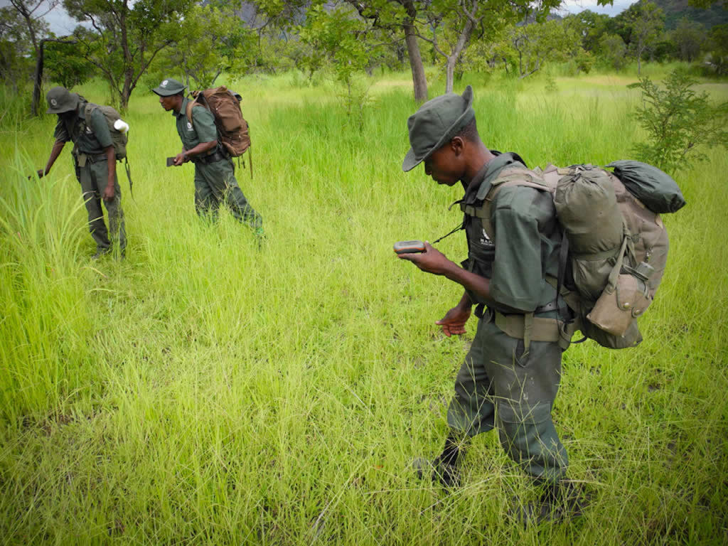 Rangers use tracking devices in anti-poaching efforts