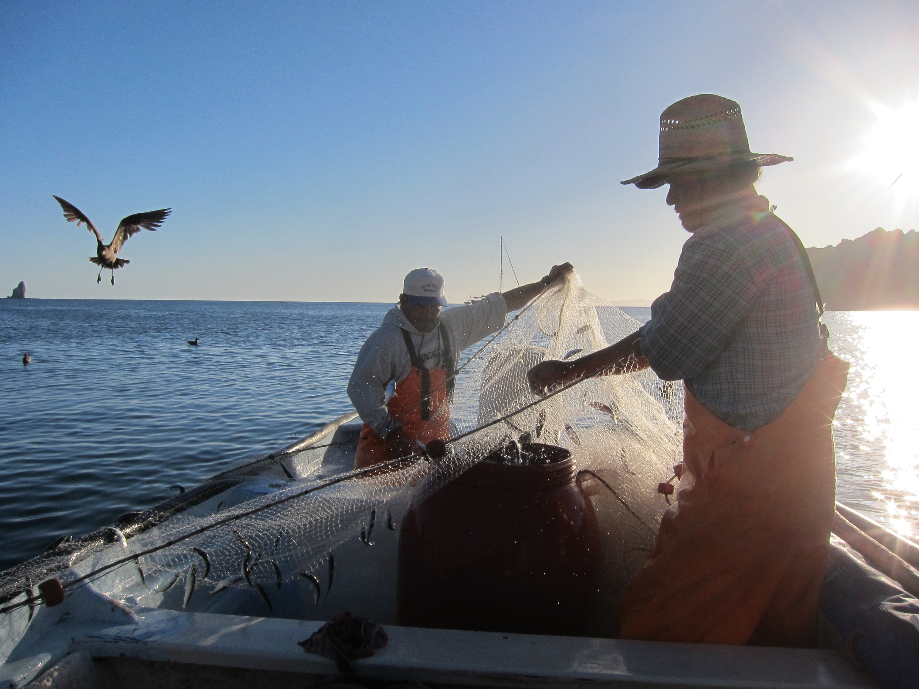 Fishers catching live bait in the Gulf of California, Mexico