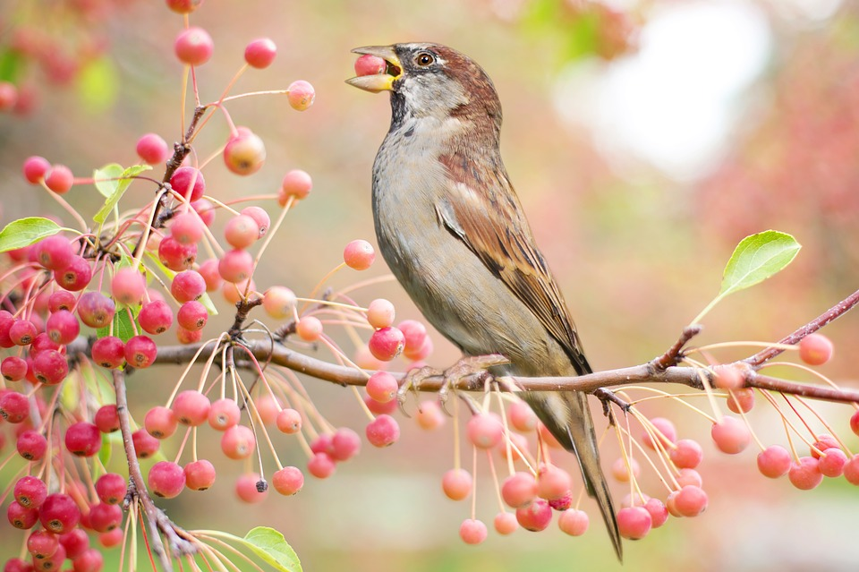 Minnesota birds are getting drunk from eating fermented berries.