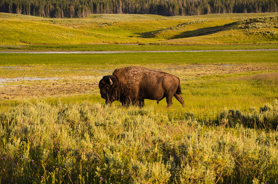 The ecosystems of the Great Plains are shifting north, according to new research. Photo: Pixabay