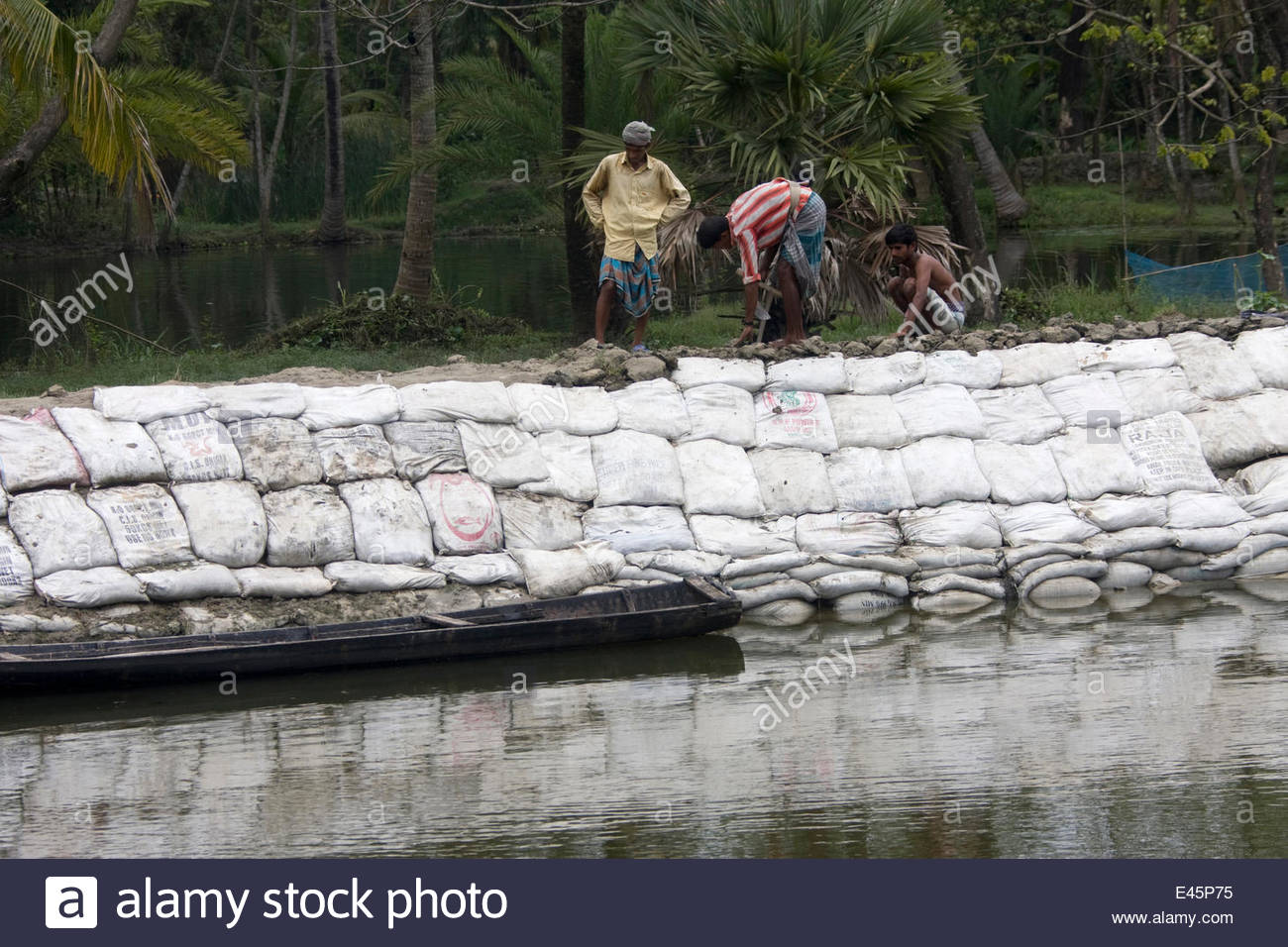 This sea wall is being constructed to protect a fishing village from flooding in Sundarbans, Bangladesh. Photo: Alamy