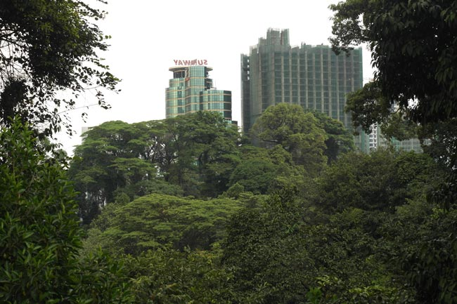 The reserve offers a natural haven in the midst of the capital city. Photo: Rainforest Journal