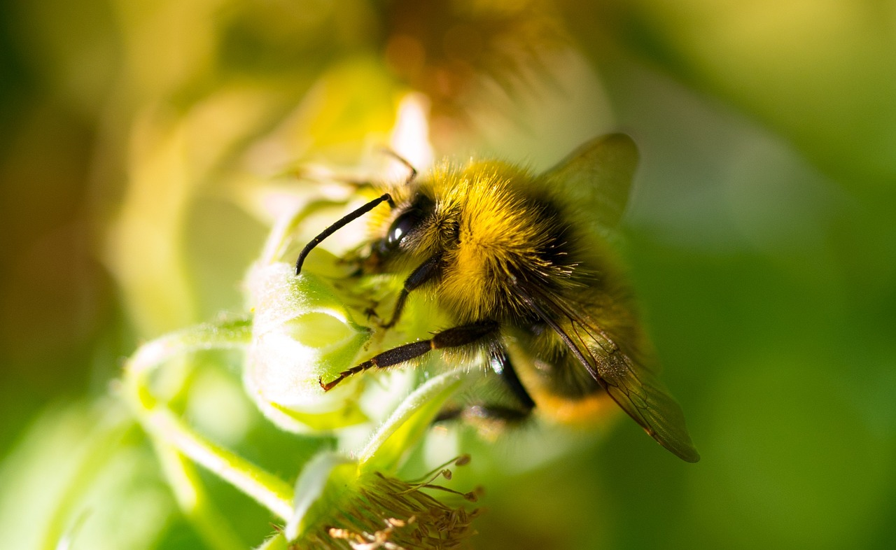 Queen bees are negatively impacted by pesticides, making it harder for them to produce eggs.