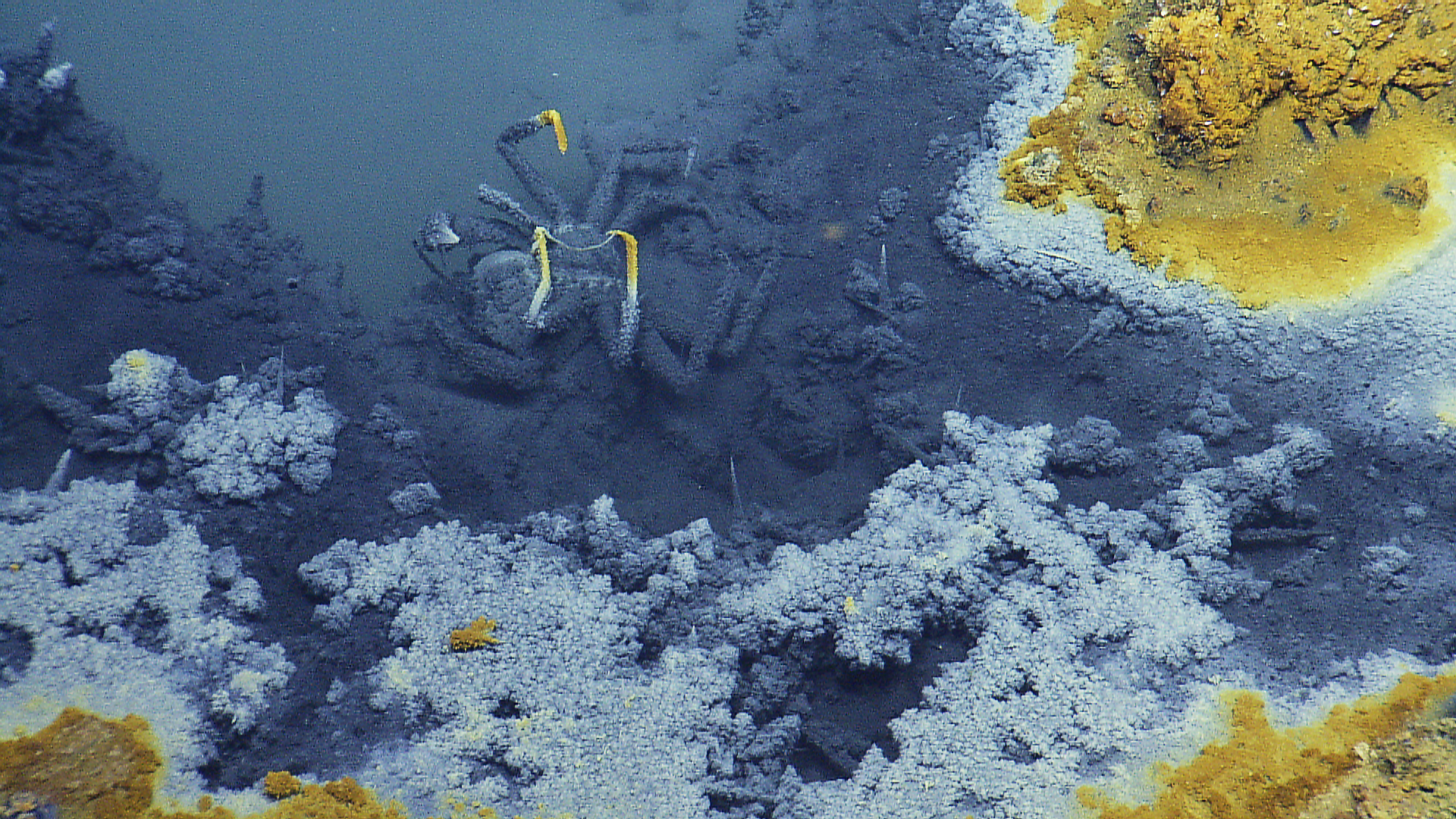 A deceased crab is seen inside of a brine pool on the ocean floor.