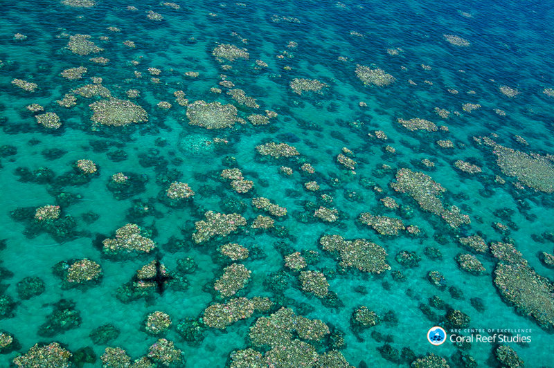 Bleached coral photographed during an aerial survey near Cairns, Australia, in March 2017. Ed Roberts/ARC Centre of Excellence for Coral Reef Studies