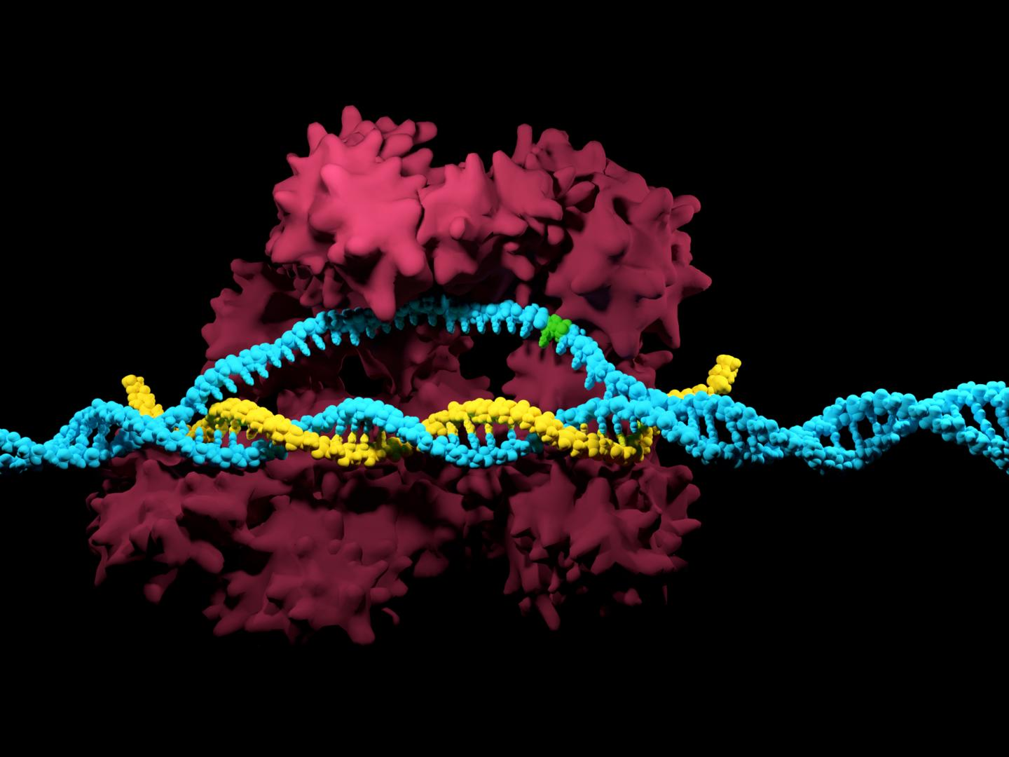 A single nucleotide variation is indicated here in green within the DNA code (in blue) and next to the CRISPR/Cas9 system. / Credit: iStock/Meletios Verras