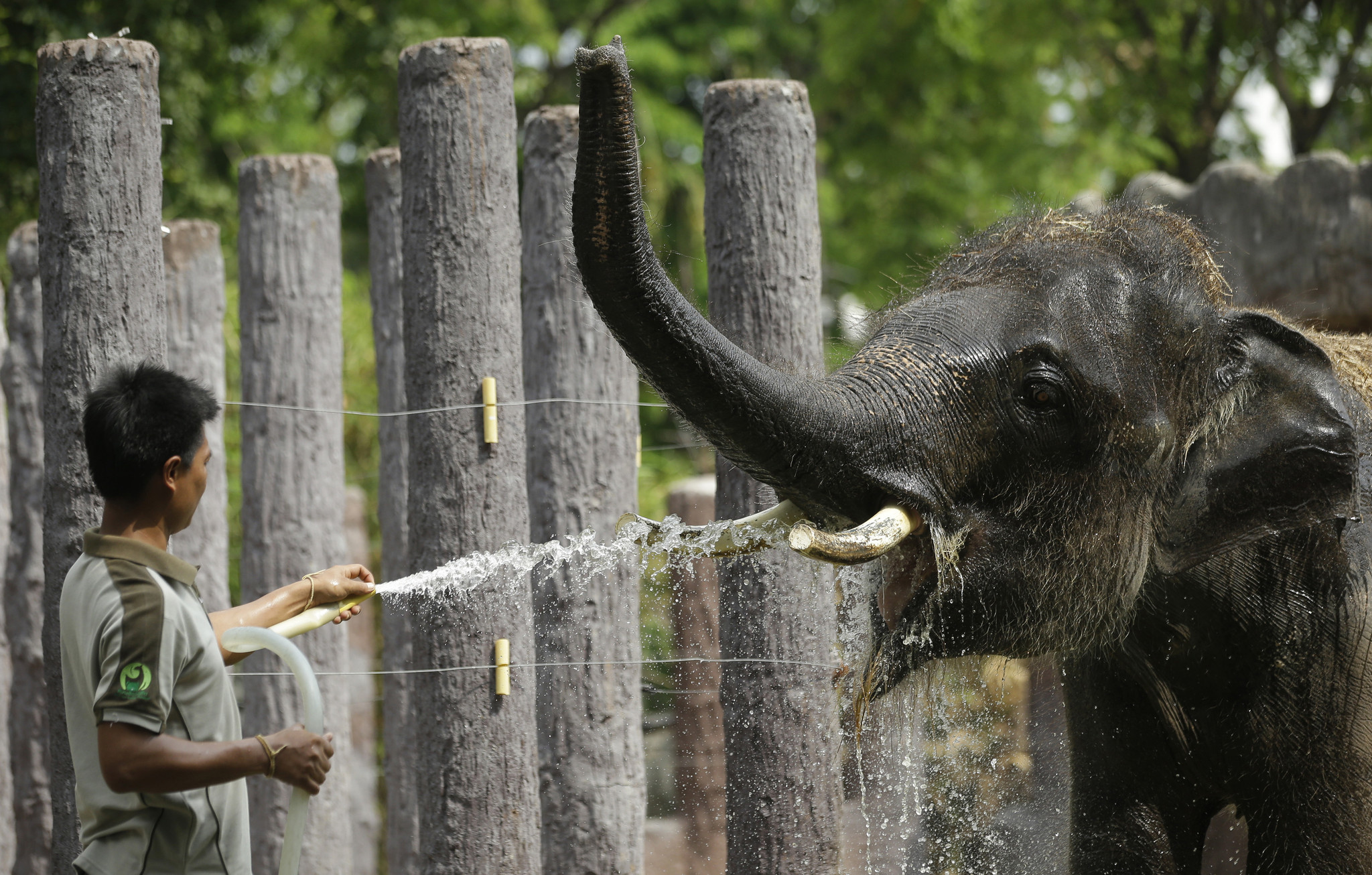 Record heat last year in Southeast Asia threatened animals and humans alike. Photo: Chicago Tribune