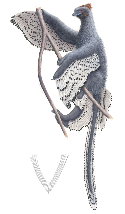 An artist's rendition of Anchiornis.