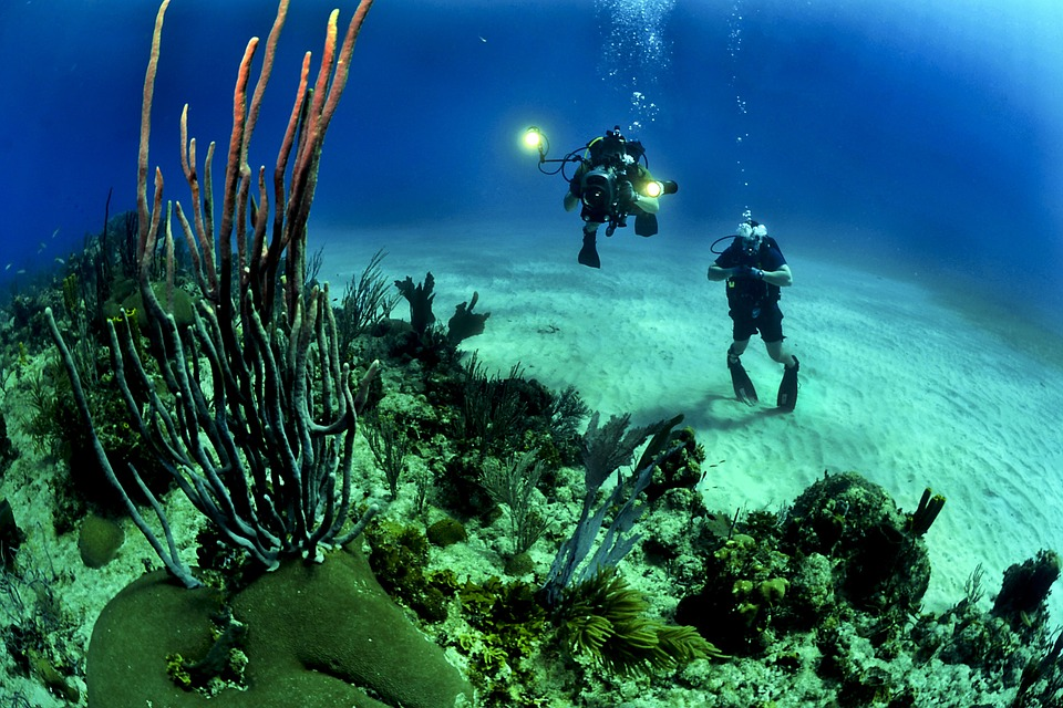 Coral reefs are shifting away from the equator to the subtropics. Photo: Pixabay