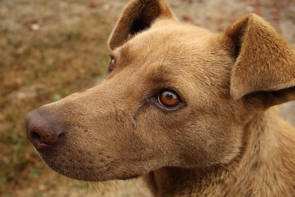 Researchers hope that this vaccine could prevent cancers in dogs. Photo: Pixabay
