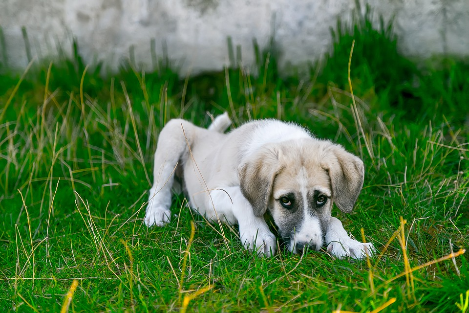 New research suggests the potential of a comparative study of canines and children with osteosarcoma. Photo: Pixabay