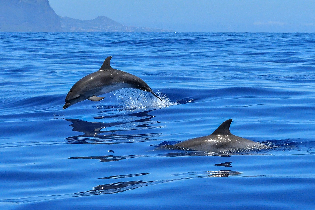 Dolphins are a type of marine animal, and they navigate the sea similarly to other marine animals.