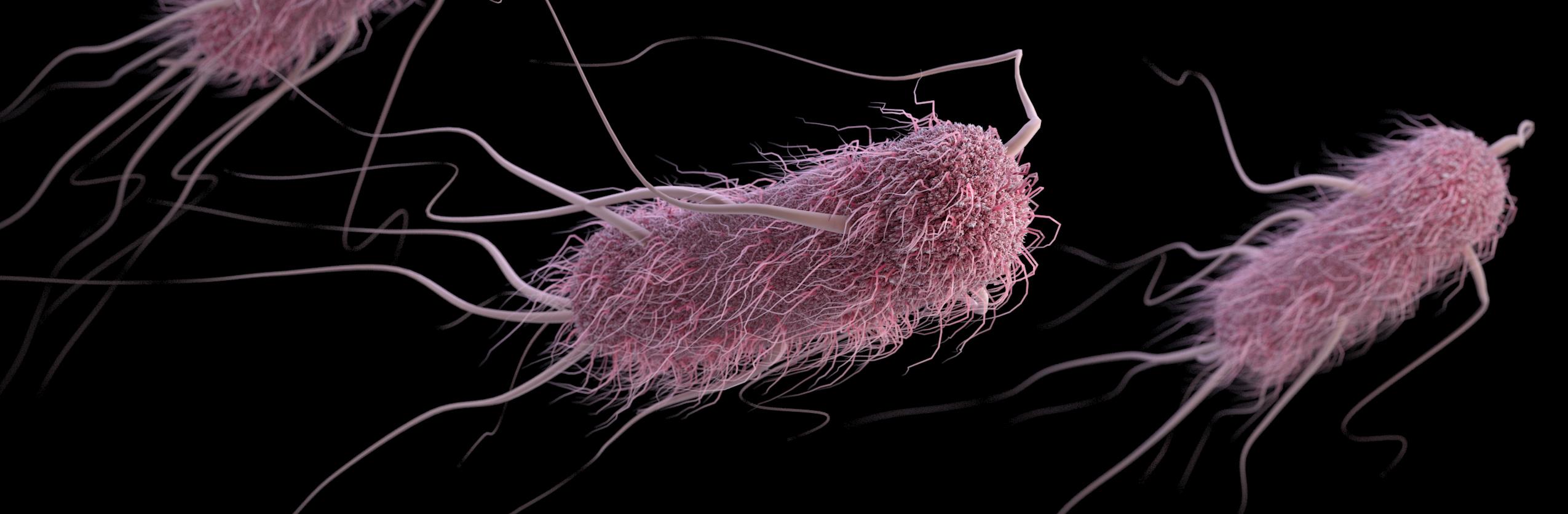 A 3D computer-generated image of Escherichia coli bacteria. / Credit: CDC/ James Archer