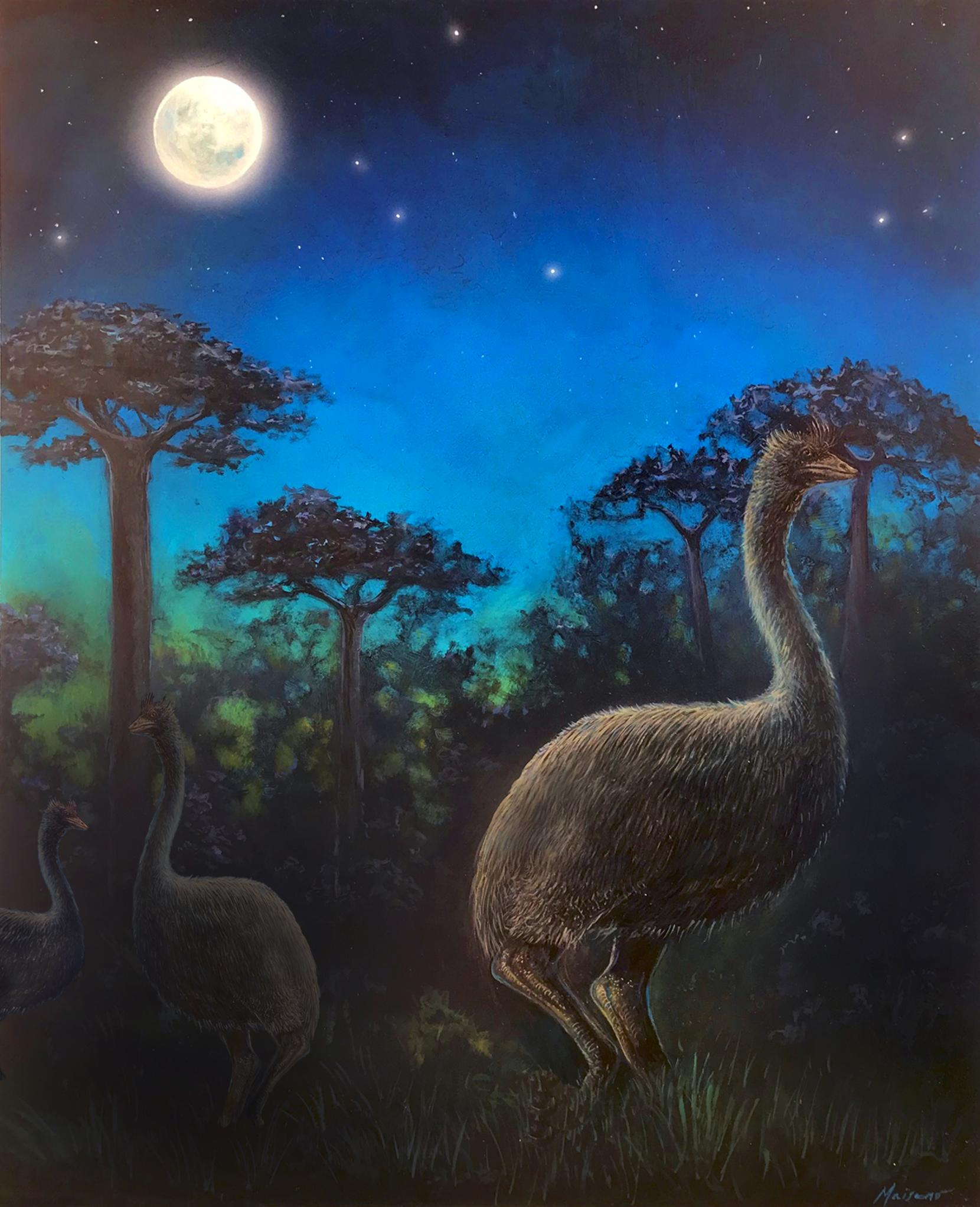 An artist's rendition of the now-extinct elephant bird.