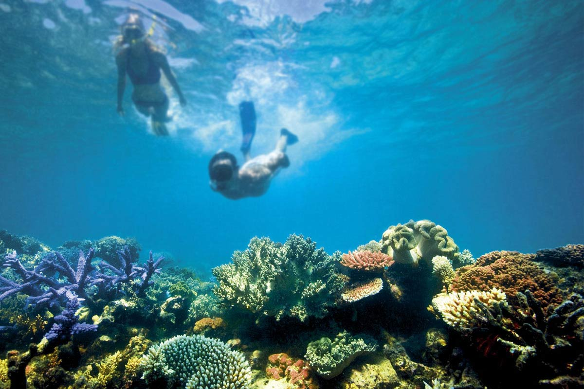 If you haven't seen this natural wonder yet, you may want to go before it's too late. Photo: www.greatbarrierreef.org