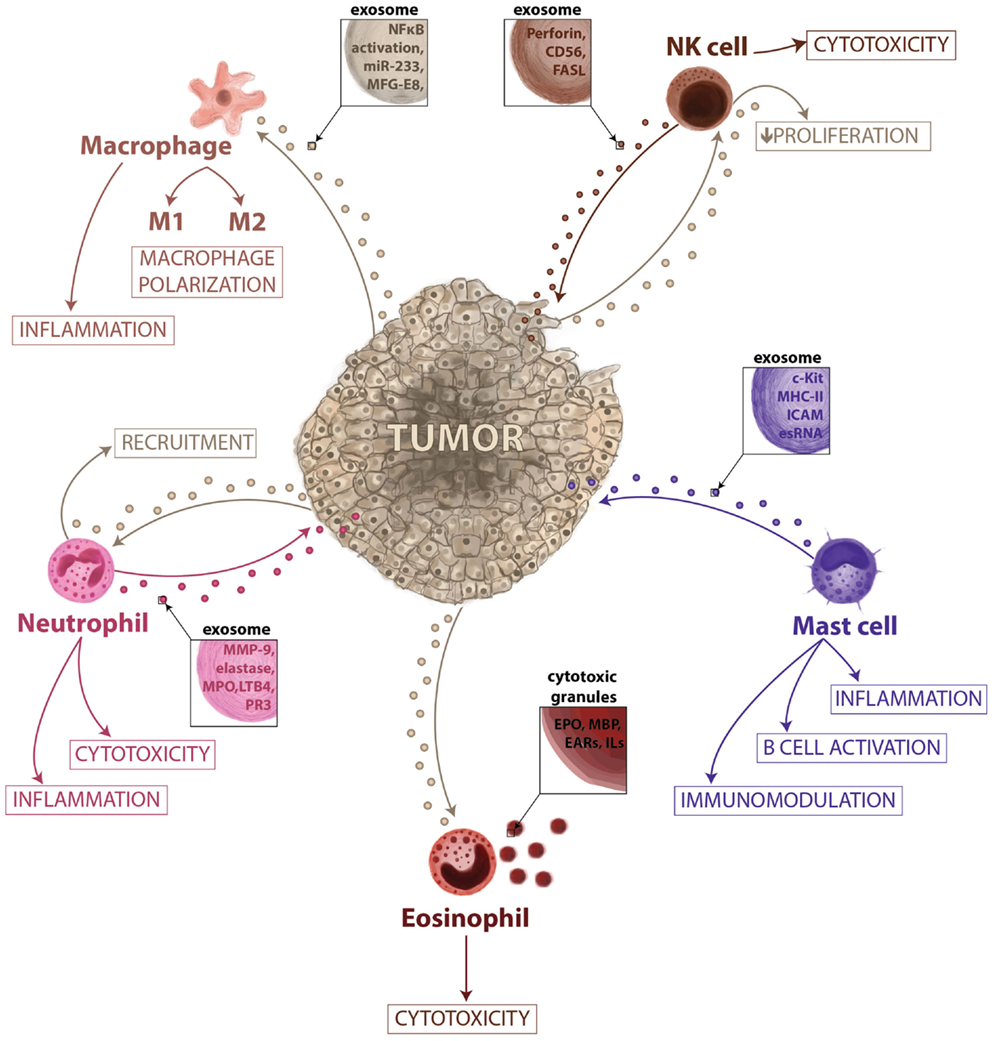 How Cancer Immunity Works | Image: journal.frontiersin.org