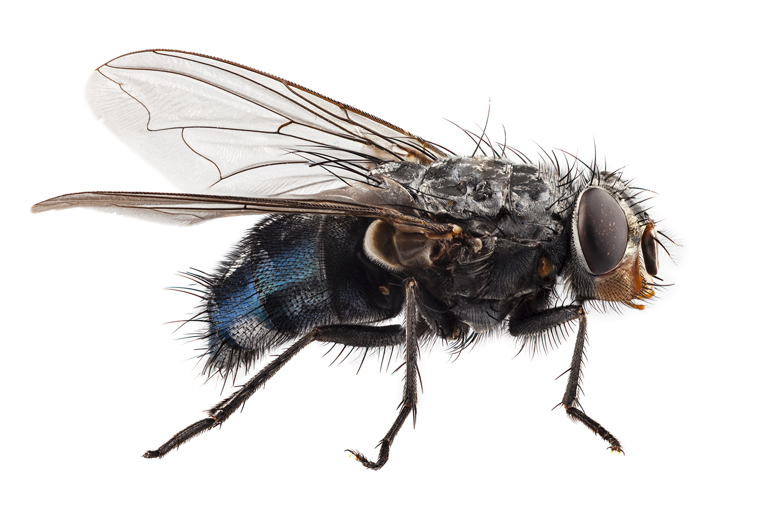 A fly is an example of an insect that relies on a salt and water balance.