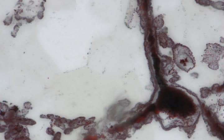 A microscopic image of one of the earliest lifeform ever found Credit: Dominic Papineau
