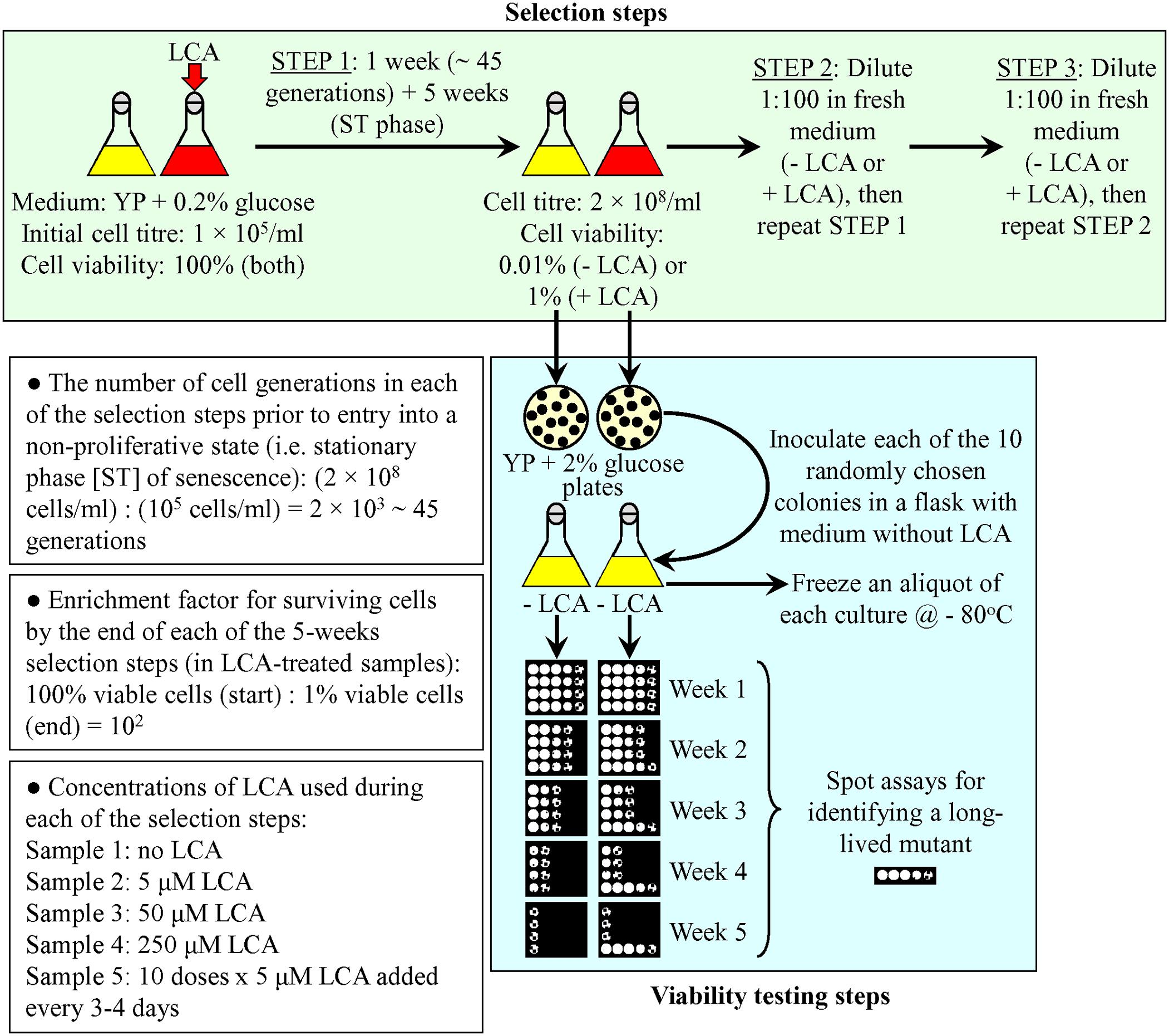 Frontiers in Genetics Gomez-Perez et al 2017