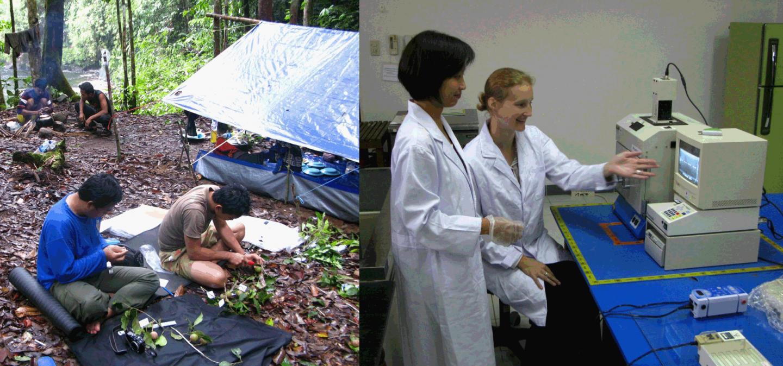 L: Endro Setiawan and Acun Hery Yanto prepare collections at Riam Berasap, Gunung Palung Nat Park. R: Rani Asmarayani and Gillian Dean in the Molecular Systematics Lab at the Herbarium Bogoriense, LIPI. CREDIT Campbell O. Webb