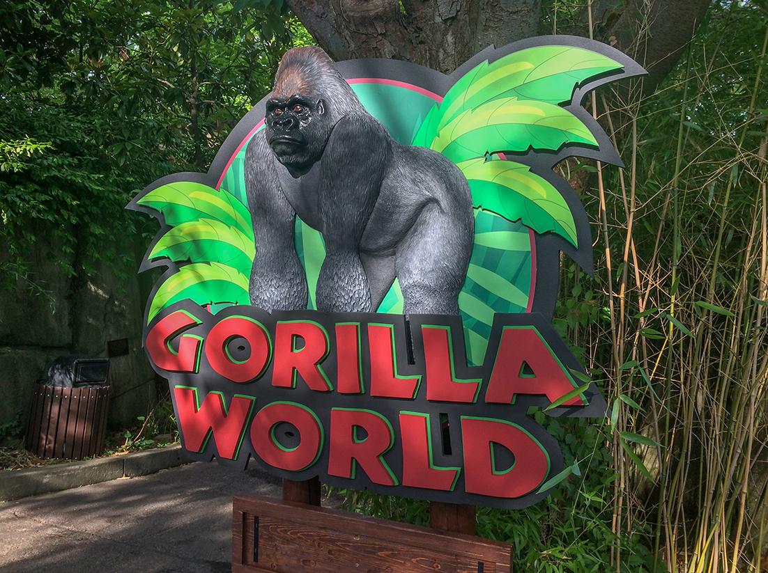 Gorilla World in Cincinatti Zoo will re-open next week.
