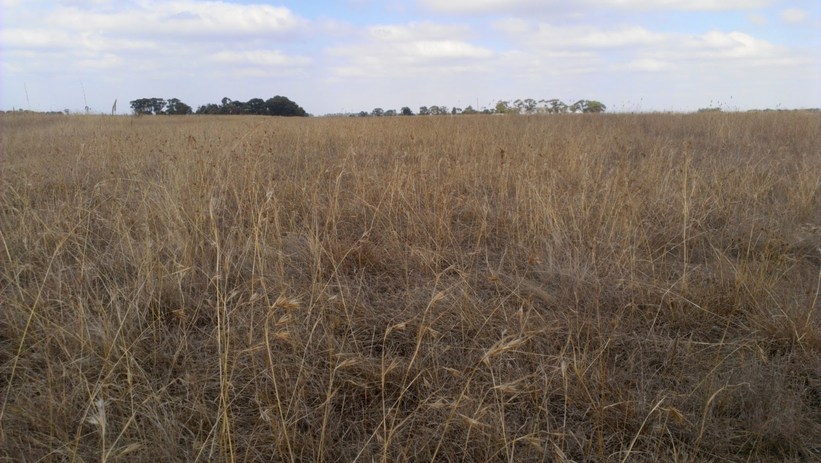 A dry grassland. Photo: Meteorological Ecological Issues