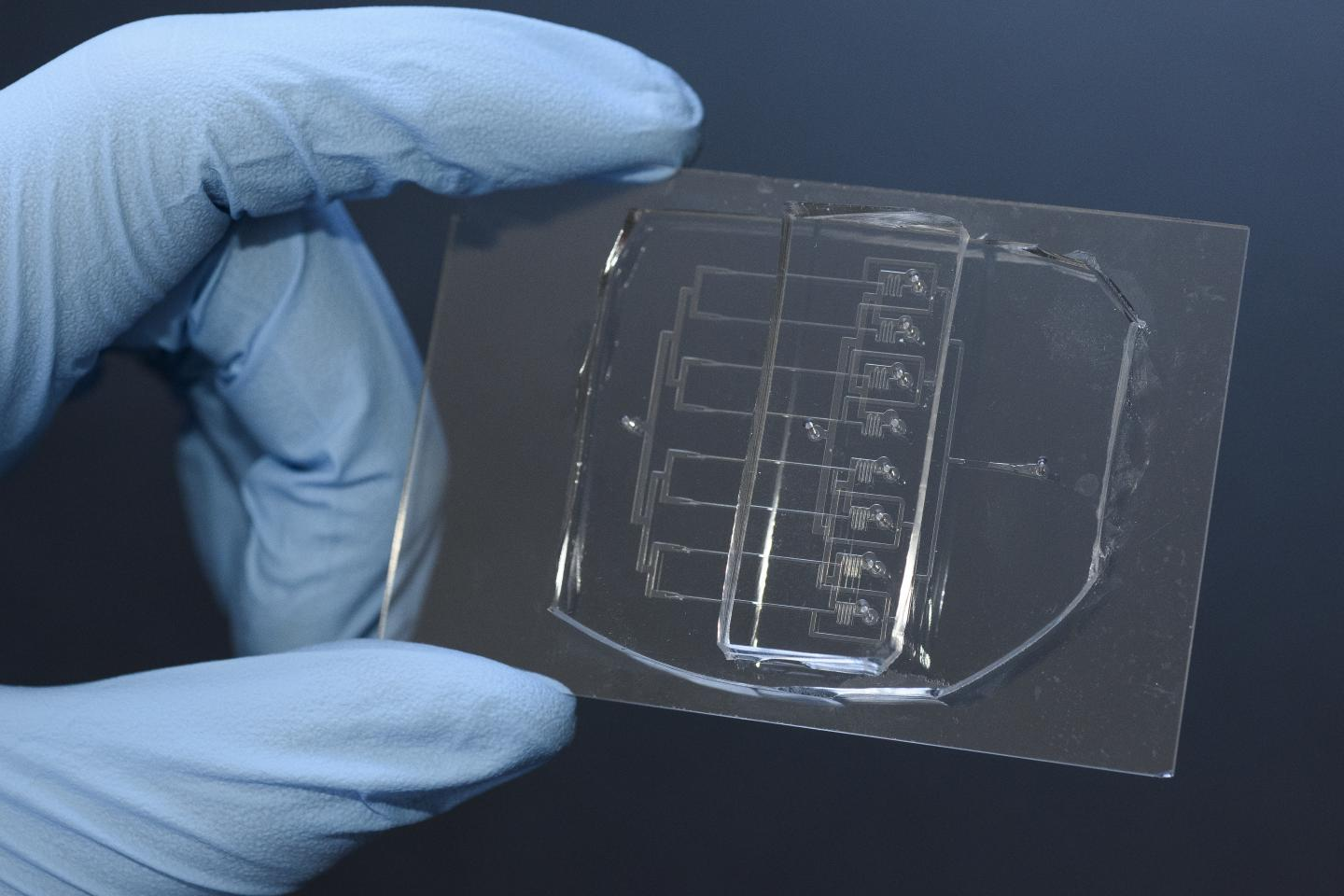 Researchers led by Sindy Tang, assistant professor of mechanical engineering at Stanford, have created a new tool for cutting cells, called a microfluidic guillotine. This eight-channel version of their tool can cut cells over 200 times faster than conventional methods. / Credit: L.A. Cicero/Stanford News Service