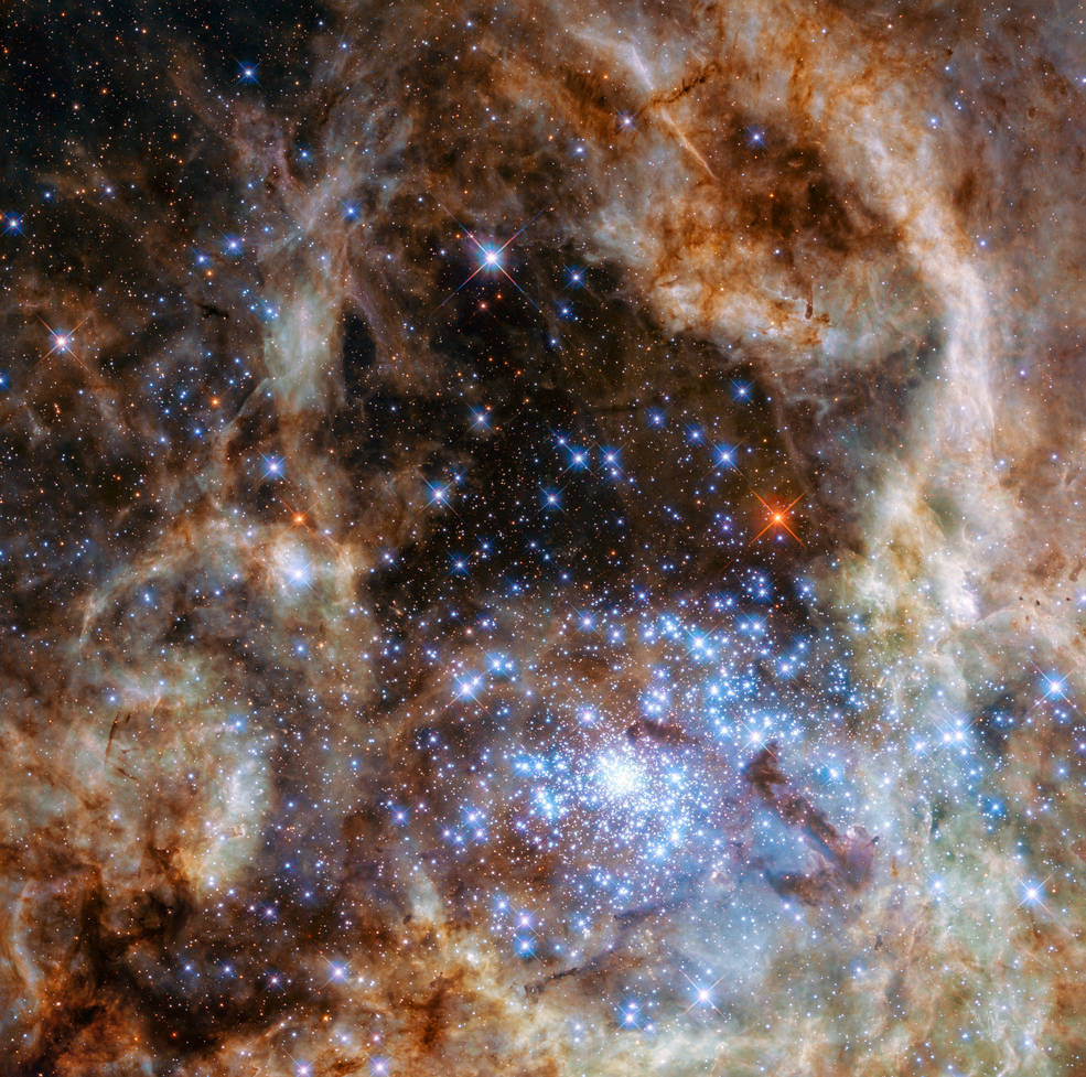 The cluster of young blue stars, as discovered by NASA's Hubble Space Telescope.