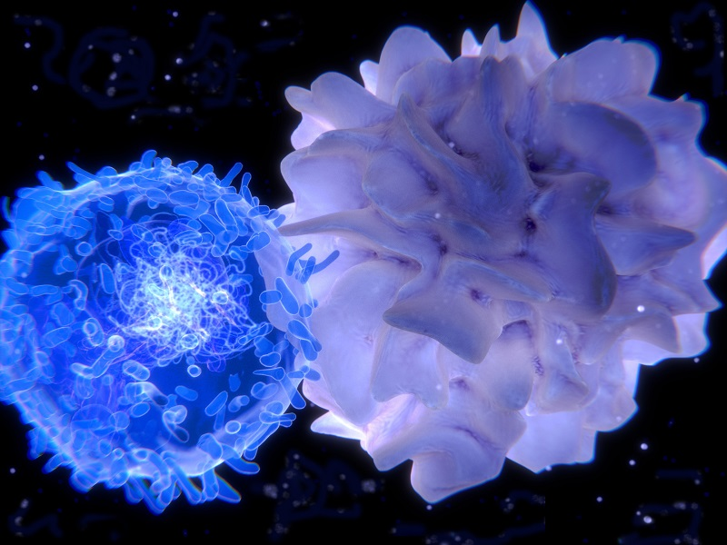 Dendritic cells prime T cells for attack against antigens. Credit: HemaCare