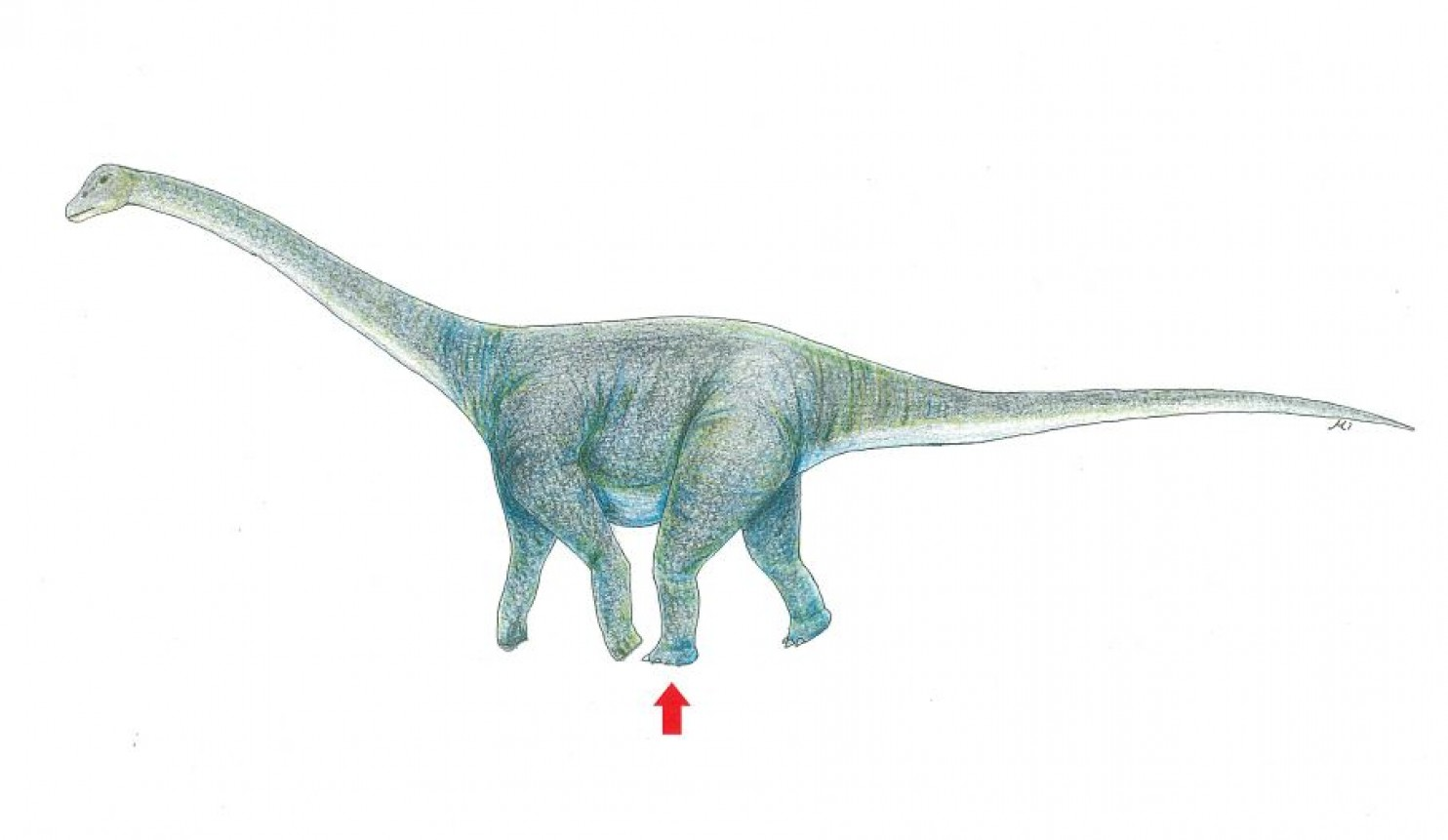An artist's rendition of what kind of dinosaur may have left this massive footprint.