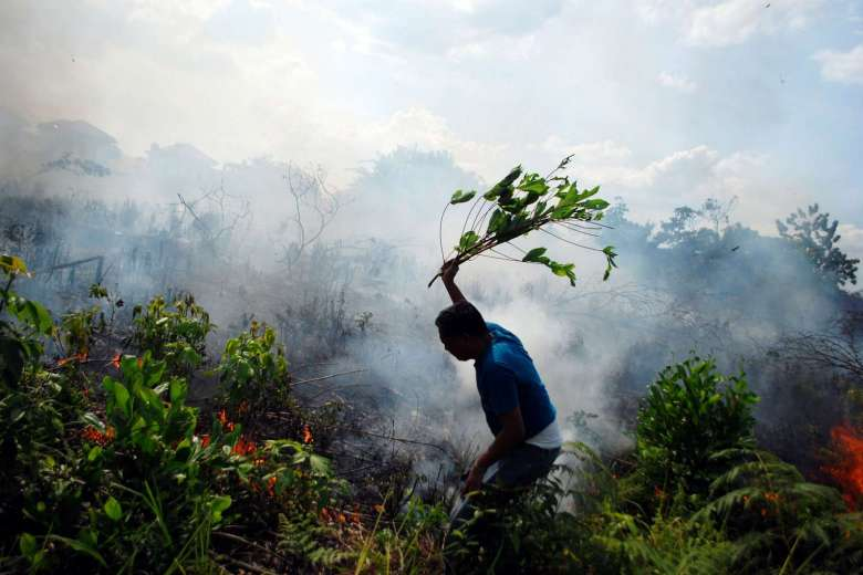 A resident tries to put out a bush fire with a tree branch in Pekanbaru. Photo: www.straitstimes.com