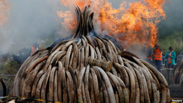 Fire burns part of an estimated 105 tonnes of ivory and a tonne of rhino horn