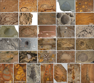Fossil invertebrates from the Werfen Formation, Dolomites, Italy. Photo: PLOS ONE