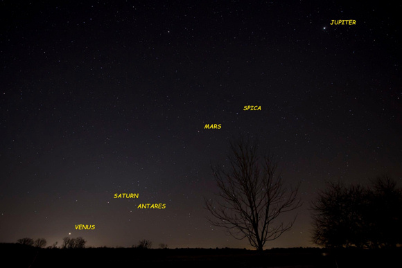 The planets will be visible in the sky just before dawn for the next month.