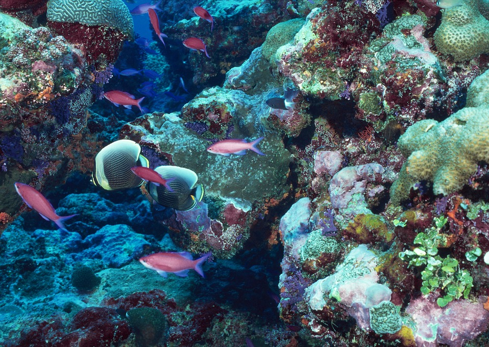 To go about saving the reefs, we must save the whole planet first. Photo: Pixabay