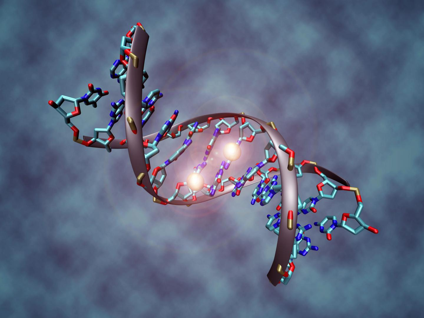 This image shows a DNA molecule that is methylated on both strands on the center cytosine. DNA methylation plays an important role for epigenetic gene regulation in development and cancer.