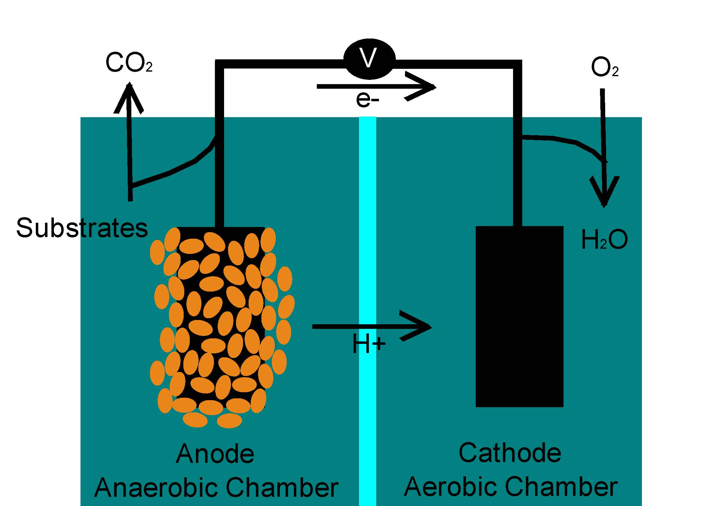 A basic diagram of a microbial fuel cell. Photo: Science Buddies