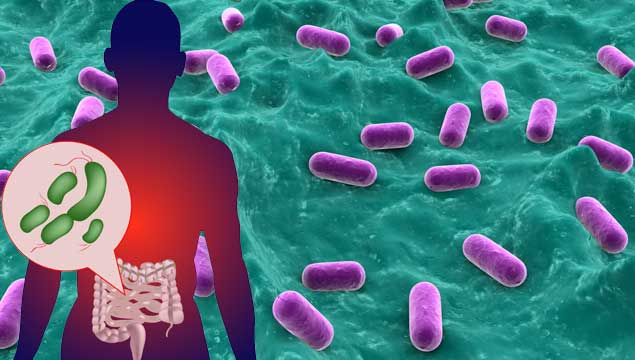 Gut microbes alter immune cells and gene expression. - Mirror Daily