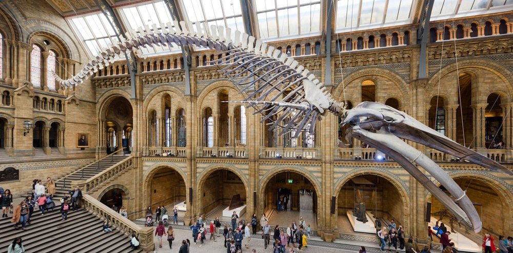 Natural history museums around the world house billions of species and their data. Photo: Popular Science