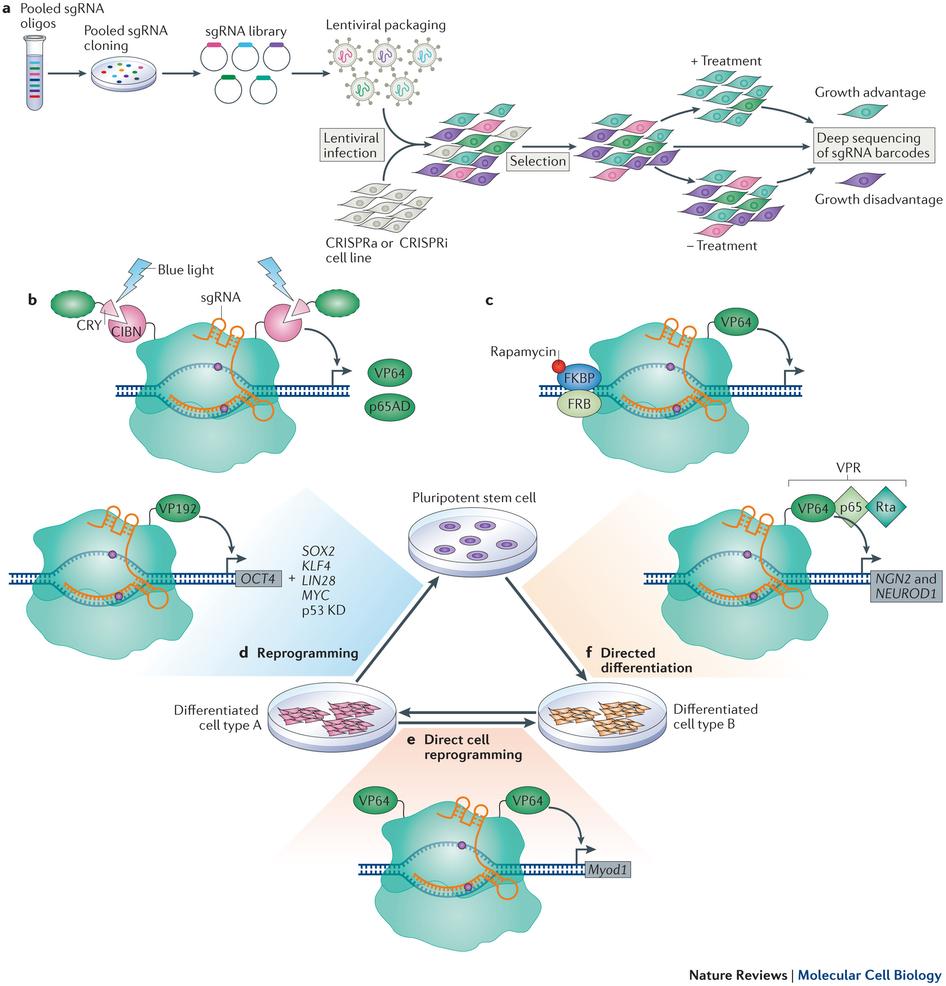 Various Applications of the CRISPR-Cas9 technology.